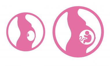 Sự phát triển của thai nhi